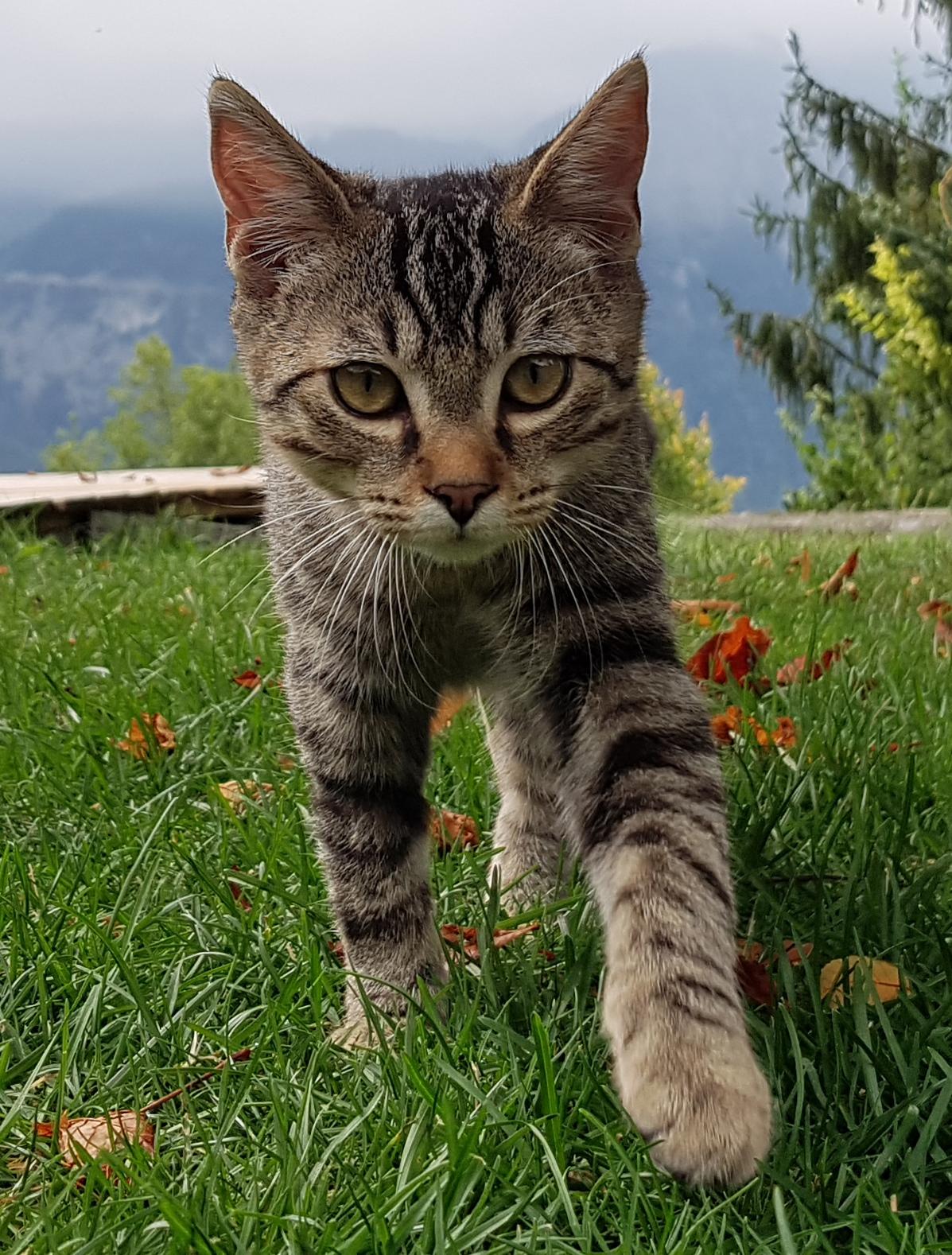 chat à la chasse