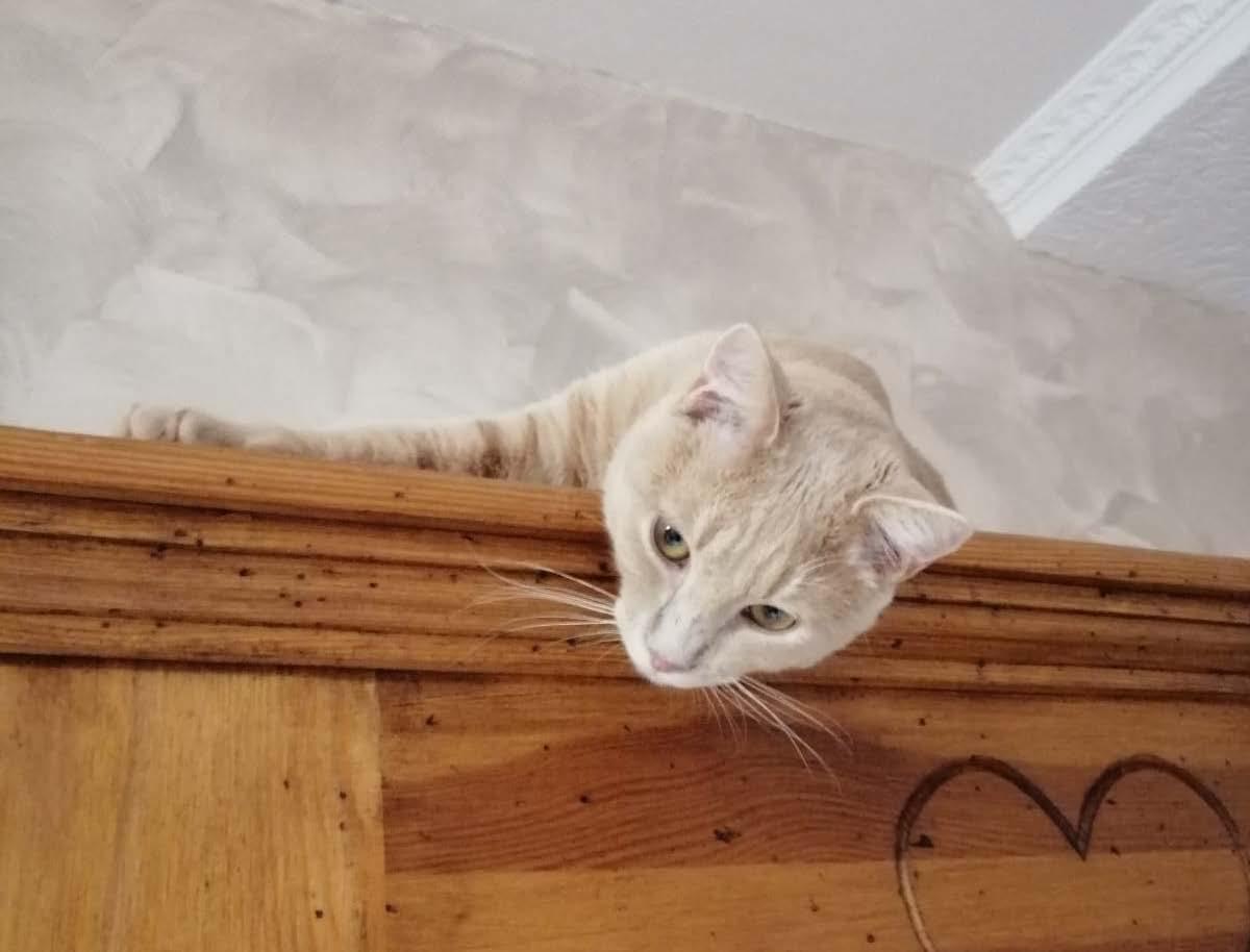chat qui se cache